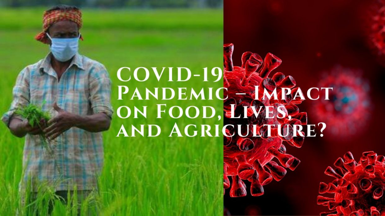 covid-19 pandemic – impact on food, lives, and agriculture?